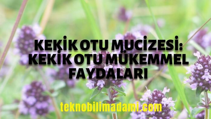 kekik-otu-mucizesi